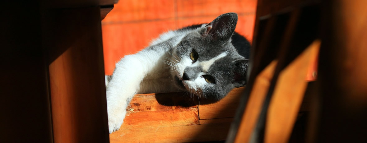 Home visits for your cat
